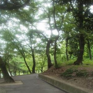 杁ケ池公園散歩・露草の花