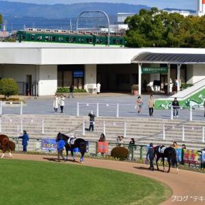 京都競馬場で京阪を