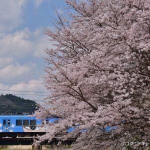 伊賀鉄道沿線で桜を