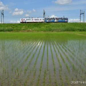 田植えが終わった伊賀鉄道沿線に