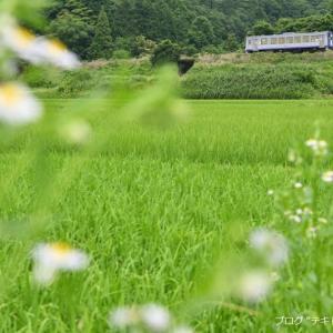 関西本線で緑のじゅうたんを