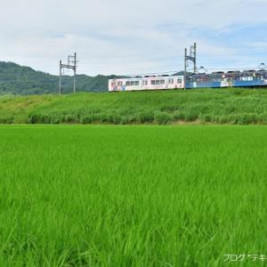 新居の田んぼで伊賀鉄道を