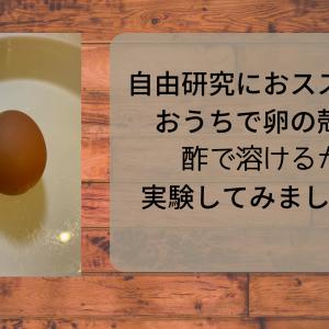 自由研究に簡単!おうちで卵の殻が酢で溶けるか実験してみました。