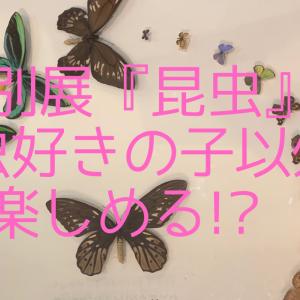 特別展『昆虫』は昆虫好きの子以外も楽しめる⁉