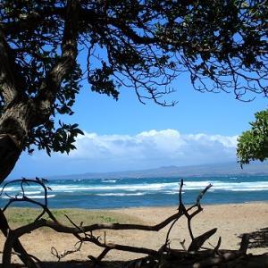 マウイの海