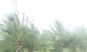 ハリケーン ダグラス