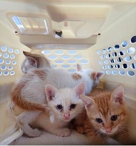 子猫の旅立ち