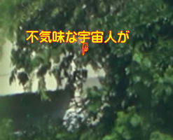 UFO撮影日記 8/24