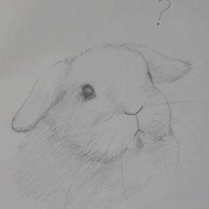 うさぎさんを描きましょう。垂れ耳。(その6)