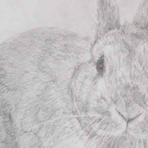 うさぎさんを描きました。デッサン。
