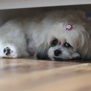 ペットと暮らす家づくり~犬編5つの便利な方法~