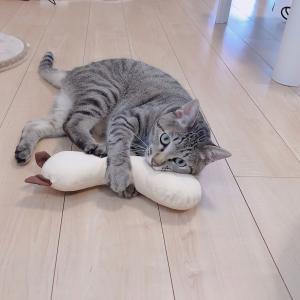 あれ?うんちが出ない!~ネコの便秘について~①