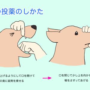 治療の関門!犬猫の投薬のススメ