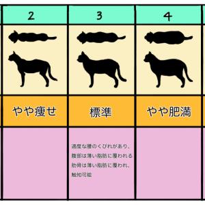 健康なネコの身体チェック