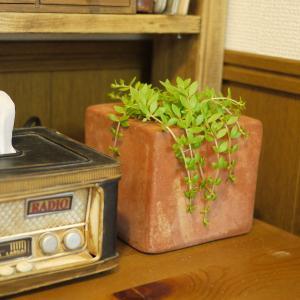 おうちにグリーンを!雑草?を飾る。