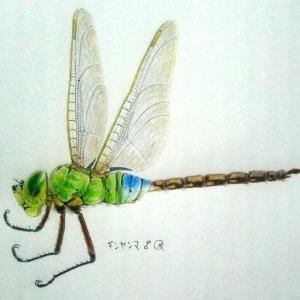 久々に昆虫絵(ギンヤンマ)