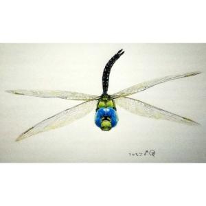 飛ぶクロスジギンヤンマ(絵)