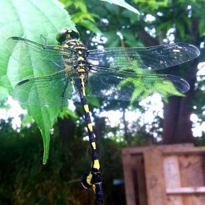 ◆野外昆虫観察◆