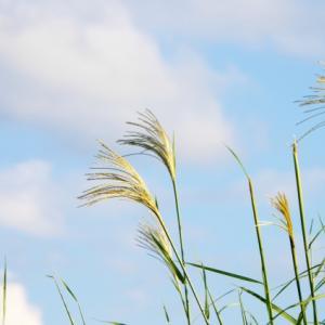「晩夏の候」の時期はいつからいつまで?読み方と意味・例文を調査!
