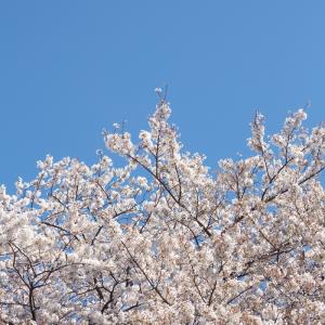 3月27日 雪組 集合日と遠のく初日