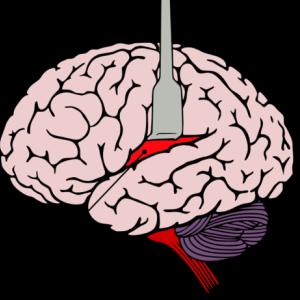 子どもを褒めるときに、子どもの脳ではどんなことが起こっているか