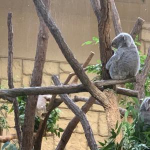 お出かけ…東山動植物園