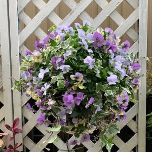 お花植え…綱木紋壁掛けタイプ