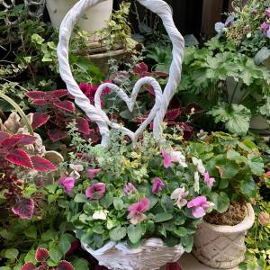 ハート花かご…お花植え