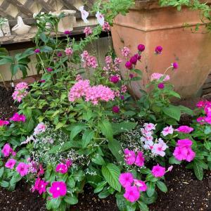 花をたのしむ…お花植え