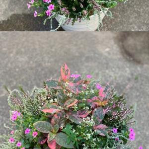 お花植えのその後