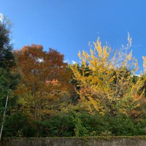 名古屋の秋…み〜つけた❣️
