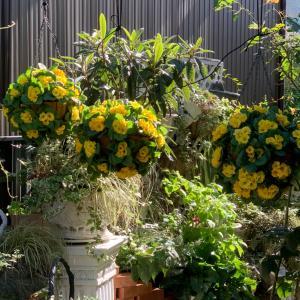 今日のお仕事…吊り下げお花植え