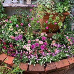 我が家の庭の植え込み…