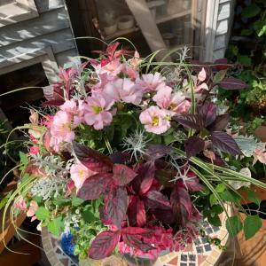 ナチュラルスタイルお花植え…経過観察