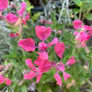 お花植え…可愛い子の名前がわからない