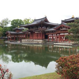 【京都3日目】藤の花満開の平等院鳳凰堂に行ってきた