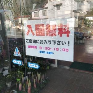 【無料】下賀茂植物公園に行ってきた !