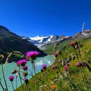 スイスハイキング      グリメンツ・エーデルワイスの群生地を求めて