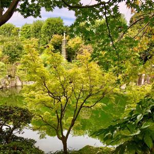 【動画あり】初秋の目白庭園