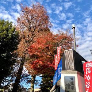 【動画あり】清立院の紅葉