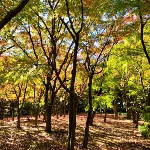 【動画あり】北の丸公園の紅葉