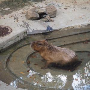 再訪・千葉市動物公園に行って来た2020