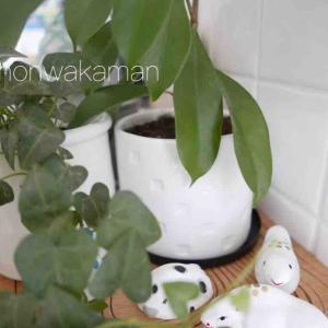 DAISOで白い陶器と白い便利グッズを!
