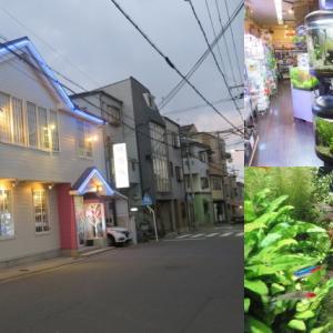 Aqua Jewelry マーサ 京都の熱帯魚、海水魚も扱うアクアショップ