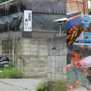 金魚屋あいこ 神奈川県の金魚専門店