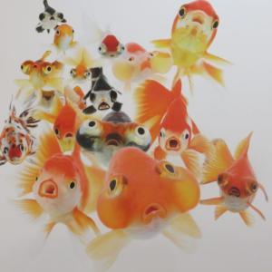 踊る金魚展 2020 – 撮影OKの金魚作品展示会