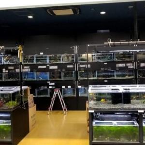 よこはま金魚久里浜店(ケーヨーデイツー久里浜店) – 熱帯魚もベタも金魚も!