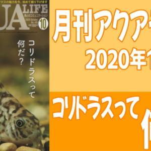 月刊アクアライフ2020年10月号「コリドラスって何だ?」のレビュー