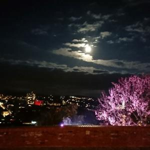【世界遺産】グラーツの歴史地区の夜景がきれいだった