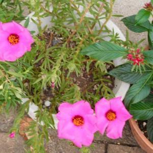 ピンクの花と黄色い花